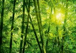 00123 Bamboo Forest