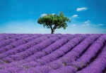 00144 Provence 8-part Wall Mural