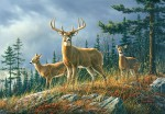 00151 Autumn Whitetails 8-part Wall Mural
