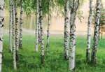 00290 Nordic Forest