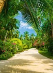 00438 Tropical Pathway