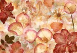 00963 Dried Flowers 8-part Non-Woven Mural | Vlies Fototapete