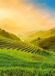 5032-2V-1 Terraced Rice Field in Vietnam