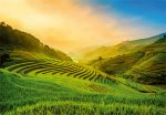 5032-4P-1 Terraced Rice Field in Vietnam