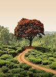 5036-2P-1 Red Tree and Hills in Sri Lanka