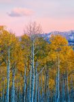 5066-2P-1 Birches and Mountains