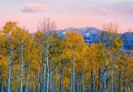5066-4V-1 Birches and Mountains