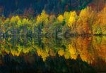 5067-4V-1 Autumn Forest Lake