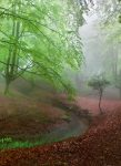 5079-2P-1 Foggy Forest