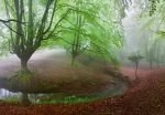 5079-4P-1 Foggy Forest