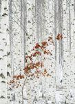 5104-2P-1 White Birch Forest