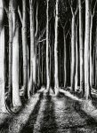 5106-2P-1 Ghost Forest