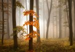 5153-4P-1 Foggy Autumn Forrest